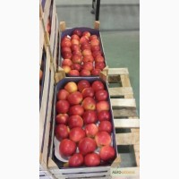 Продажа яблок из Польши