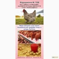 Вакцина против Ньюкаслской болезни птицы из штамма Ла-сота