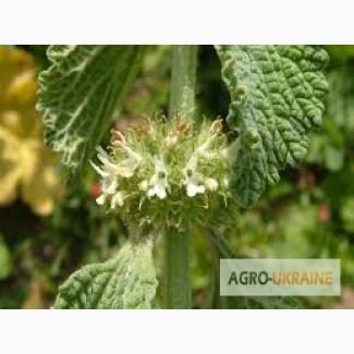 Закупка лекарственных растений