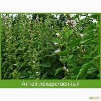 Трава алтея