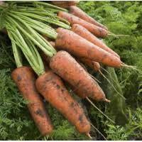 Куплю морковь на постоянной основе