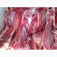 Продам свиней в полутушах оптом
