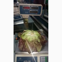 Продаем салат латук красный оптом, мелким оптом