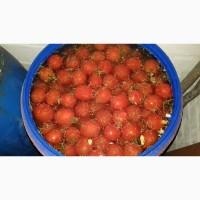 Продам соленый арбуз и помидор