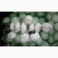 Продам капусту (Адаптор, Зенон) 2 сорт. Ціна 2 грн