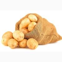 Купим посадочный картофель тирас Ривьера и Мелоди