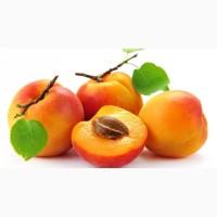 Куплю абрикос крупный в качестве от 2-х тонн
