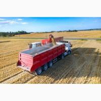 Закупляємо пшеницю з поля (самовивіз)