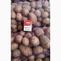 Продам картофель оптом есть выбор по сортам, картофель хорошего качества