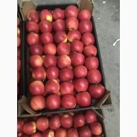 Продам яблука з холодильника фрешовані