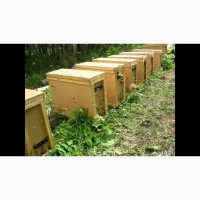 Продам Бджолопакети карпатка 4 р. 3 розплод 1 корм