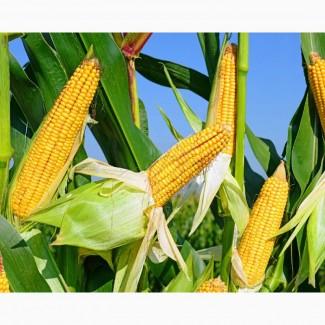 Кукурузу куплю