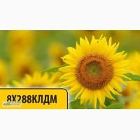 Соняшник ВО під євролайтнінг 8X288КЛДМ (DOW SEEDS / Дау Сідс) посівний матеріал