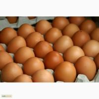 Продам яйцо куриное, перепелиное оптом - ЛУЧШИЕ ЦЕНЫ