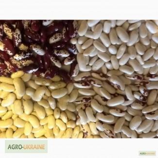 Фасоль урожай (сбор от населения)