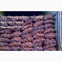 Закупаем Картофель Отборный крупный