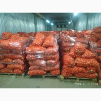 Продам цибулю лук Кахахстан