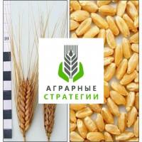 Насіння. Яра пшениця. Сорт Нащадок (еліта) від ТОВ ДП Аграрні Стратегії