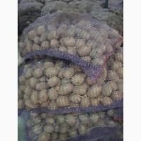 Продам товарный картофель в Одессе цена 6 грн