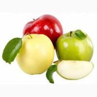 Закуповуємо яблука 2021