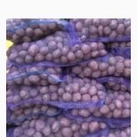 Продам насіневу картоплю