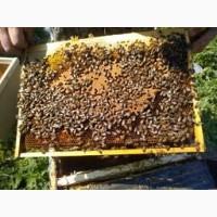 Продам Пчелопакеты Карпатка 2019