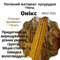 Високоврожайний гібрид кукурудзи - ОНІКС (ФАО 350)