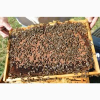 Пчёлопакеты бджолопакети карника карпатка