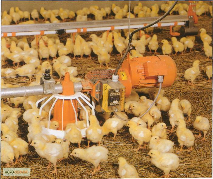 Выращивание и уход за цыплятами бройлерами в  829