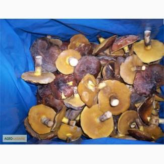 Продам замороженные грибы маслята целые