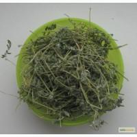 Продам Якорцы стелющиеся Tribulus terrestris (купить в Украине)