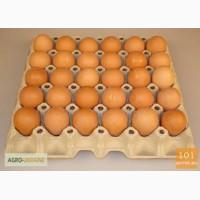 Инкубаторские яйца(отборные, бройлер, брама, несушка)