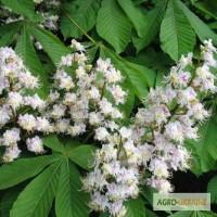 Цветы каштана 50 грамм