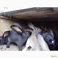 Кролики разных пород экологическ