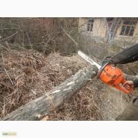 Очистка участка от деревьев Киев