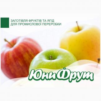 Покупаем яблоко для промышленной переработки от 22 т