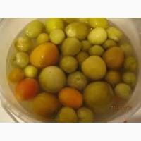 Куплю бочковой зеленый помидор