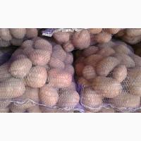Продажа картофелящ от производителя оптом. Цена от 3.2 грн/кг