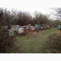 Продаю пасеку и мёд подсолнечника