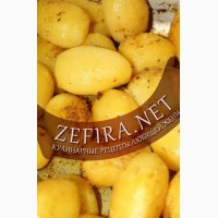 Продадим молодую картошку, крупным оптом