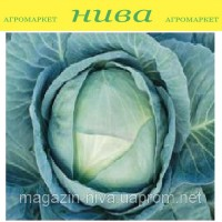 Агресор F1 насіння капусти білокачанної середньо-пізньої Syngenta 25 насінин в асортименті