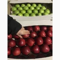 Маємо яблуко на продаж: Фуджі, Голден, Ред Делішес