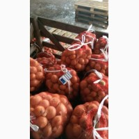 Продам лук медуза