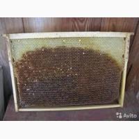 Продам Пчелиная сушь