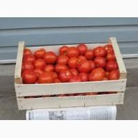 Оптовая продажа помидоров доставка реализуем томат