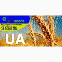 Семена озимой пшеницы (элита), Харьковская область, Агротрейд