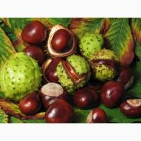 Продам плоды конского каштана