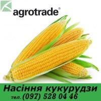 Семена кукурузы ПЛЕВЕН Maisadour Semences