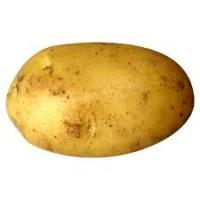 Від населення від 20 тонн купимо картоплю, ТЕРМІНОВО