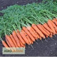 Профессиональные семена моркови Атилио F1 (Vilmorin Франция ) 100 000семян